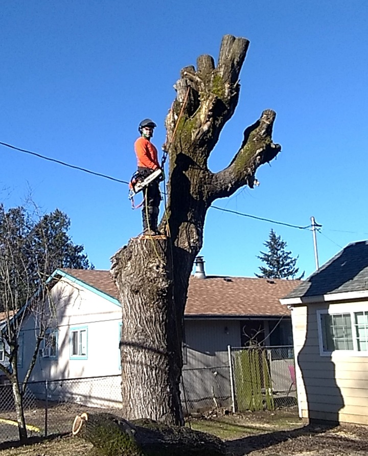 Local Residential Tree Services 3