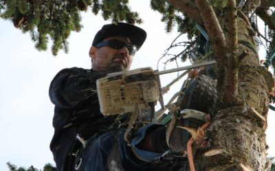 Beaverton tree trimming and other tree service
