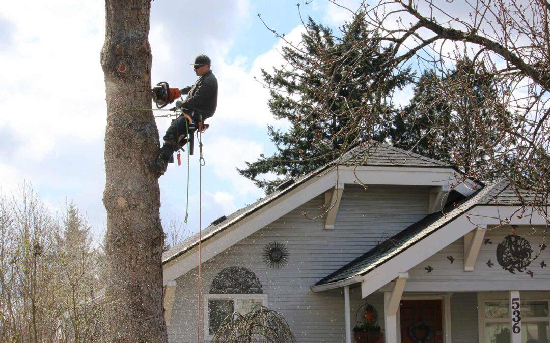 Reputable Lake Oswego tree removal service