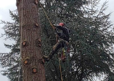 Tree Removal 2
