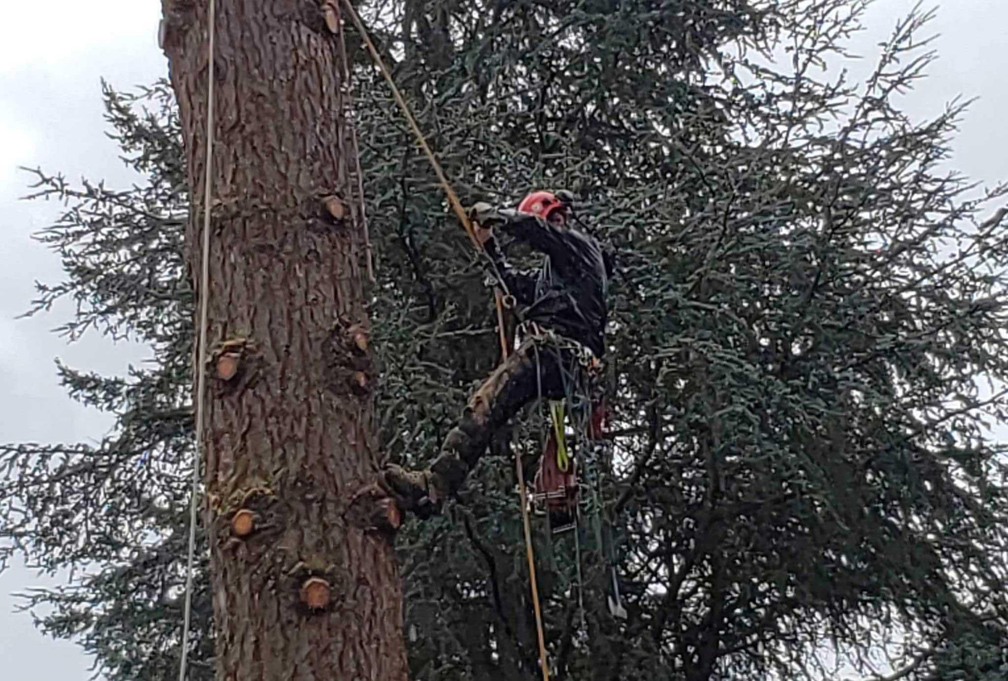 Tree Service Estimates | Tree Time Tree Service 6