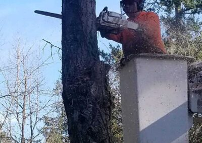Tree Removal 4