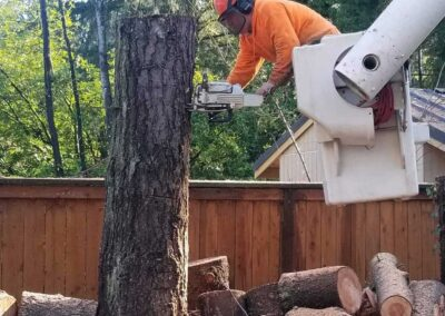 Tree Removal 10