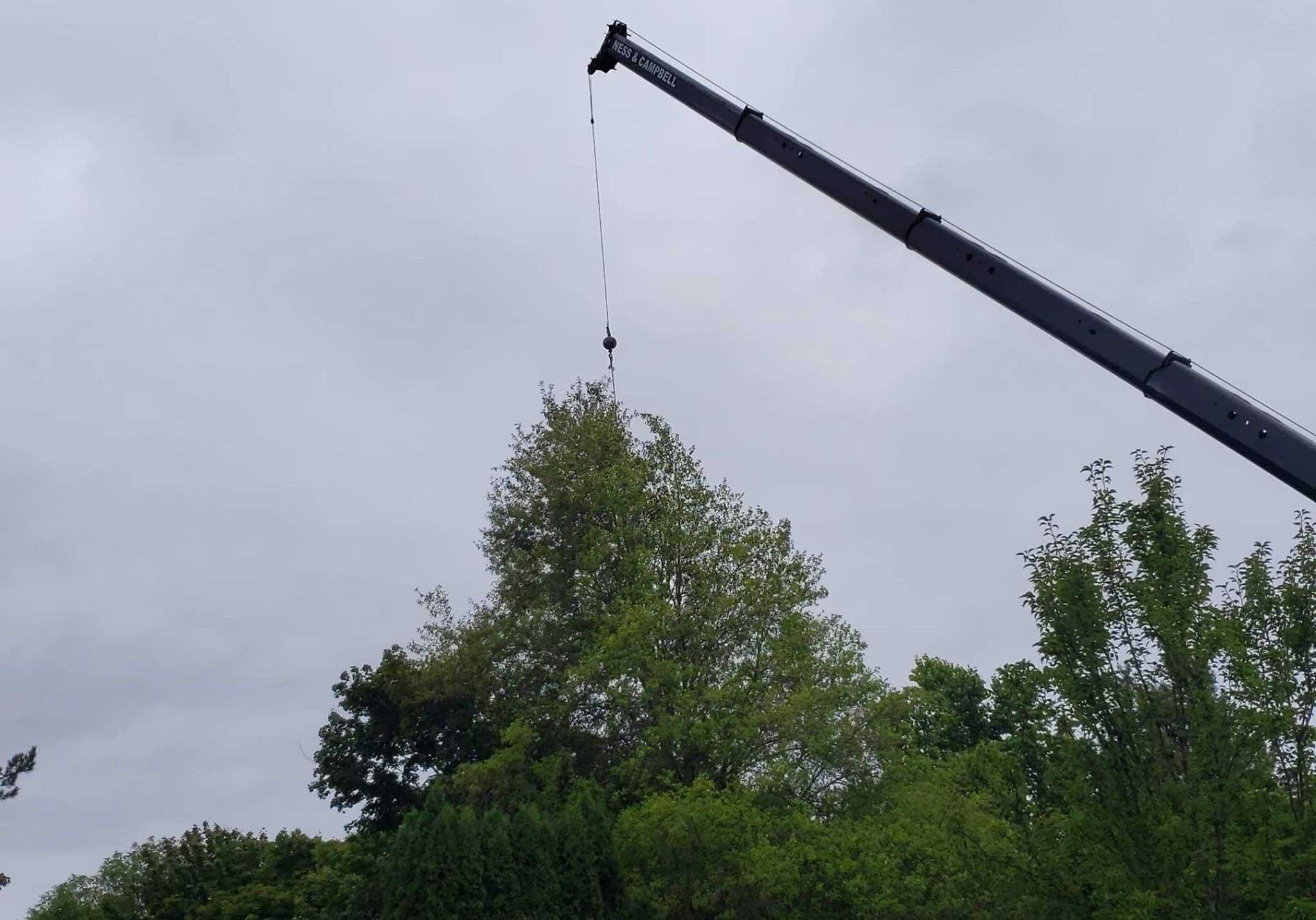 Tree Service Estimates | Tree Time Tree Service 5