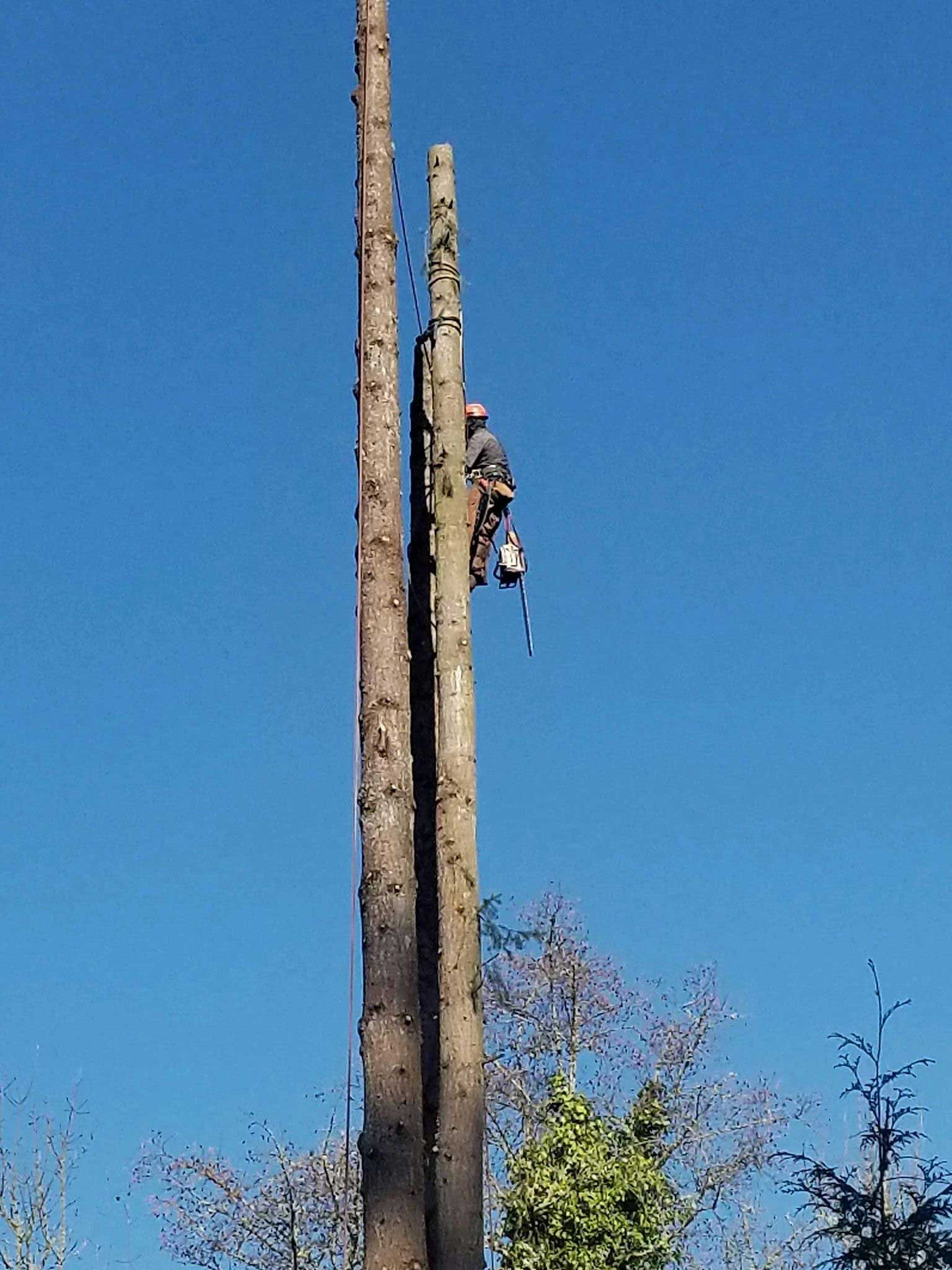 Emergency tree service with a fast response