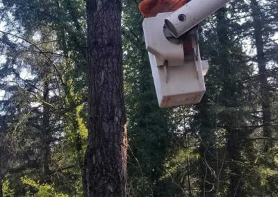 Tree Removal 8