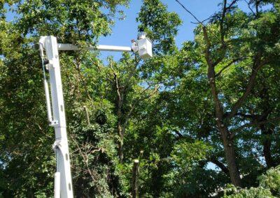 Tree Service Estimates | Tree Time Tree Service 1