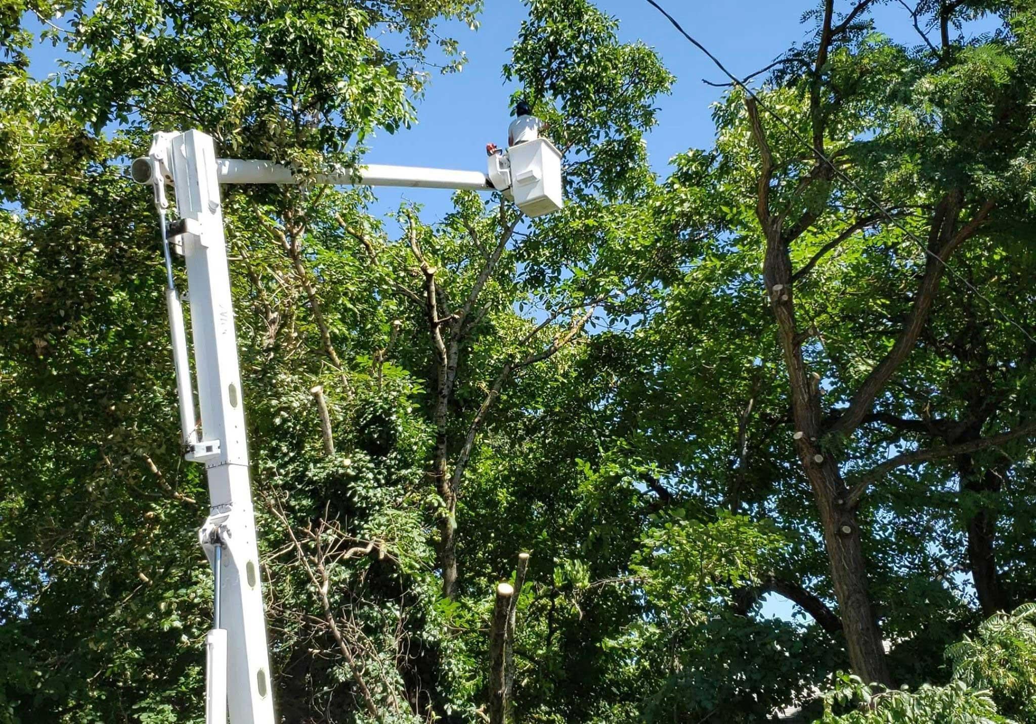 Tree Service Estimates | Tree Time Tree Service 4