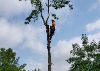 Tree Time Arborist