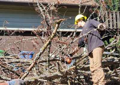 Local Residential Tree Services