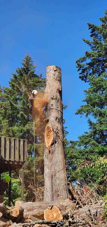 Dead tree removal service in Milwaukee, Oregon 4