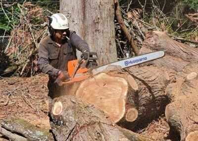 Dead tree removal service in Milwaukee, Oregon 6