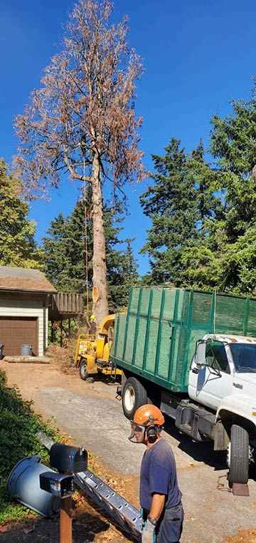 Dead tree removal service in Milwaukee, Oregon 2
