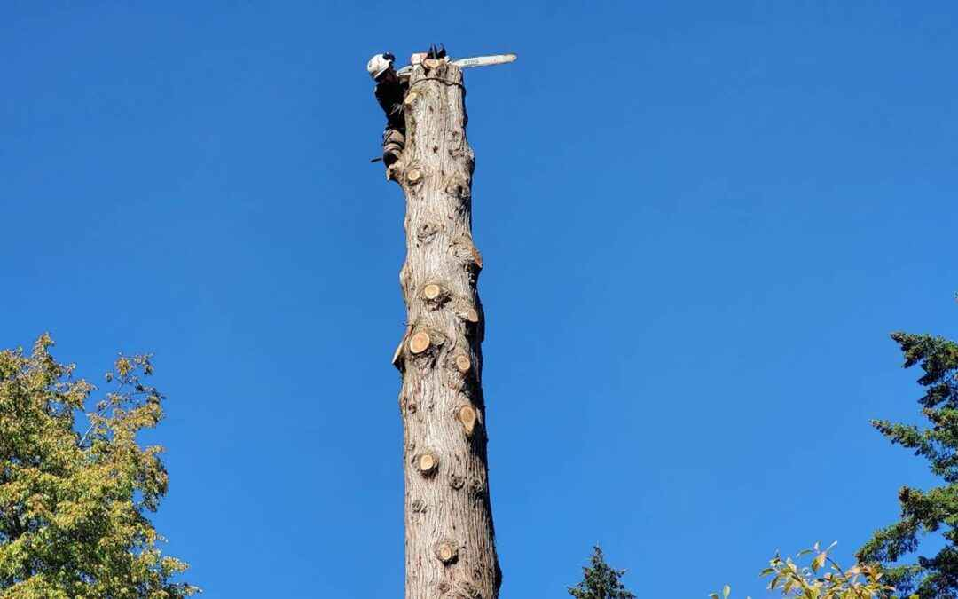 Dead tree removal service in Milwaukee, Oregon