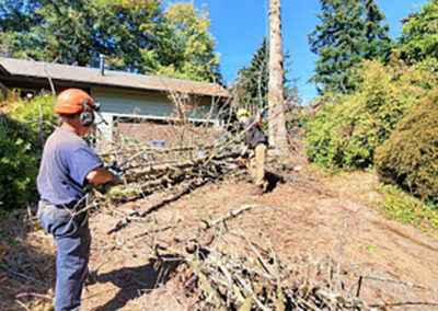 Dead tree removal service in Milwaukee, Oregon 7