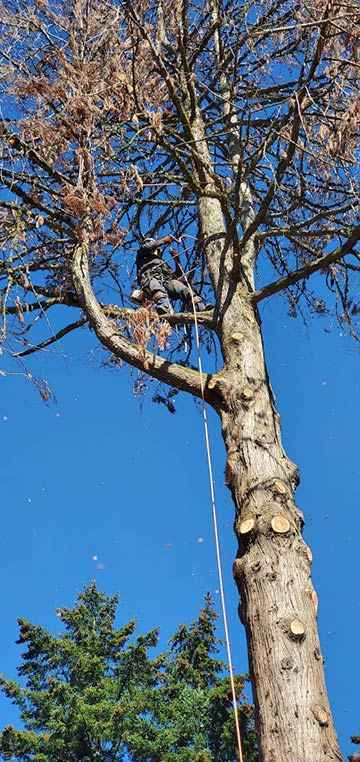 Dead tree removal service in Milwaukee, Oregon 3