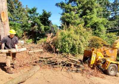 Dead tree removal service in Milwaukee, Oregon 5