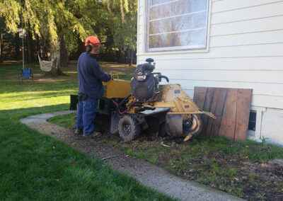 Stump removal for healthy lawn care 1