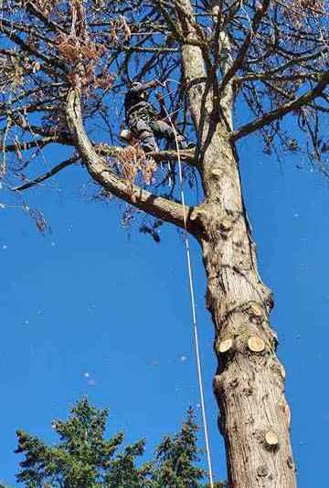 Hillsboro Tree Service Professionals