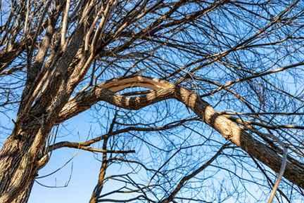 Gresham tree service professionals