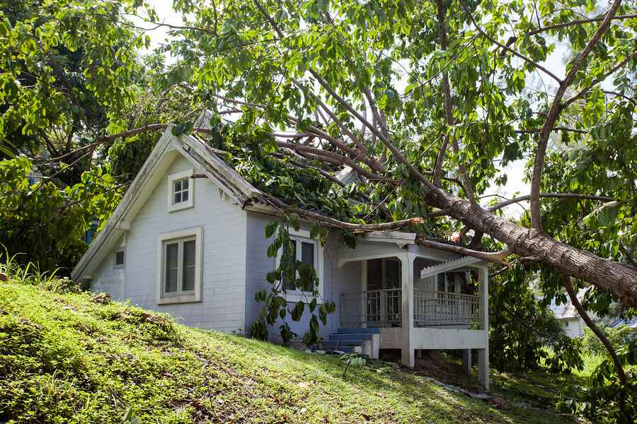 Portland Tree Professionals