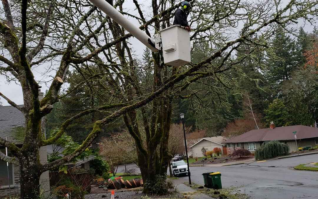 Important Reasons Why Your Property Needs Arborist Services