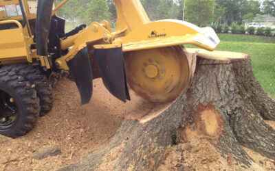 Call for Stump Grinding Service in Portland, Oregon