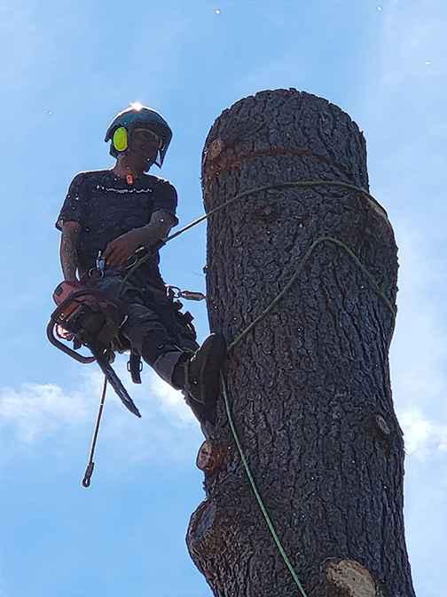 Tree Removal Service in Oregon