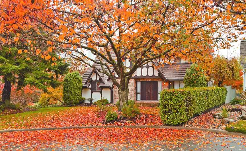 Fall Tree Services