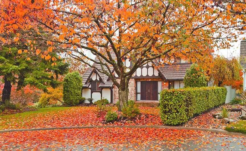 Fall tree services in Portland, Oregon