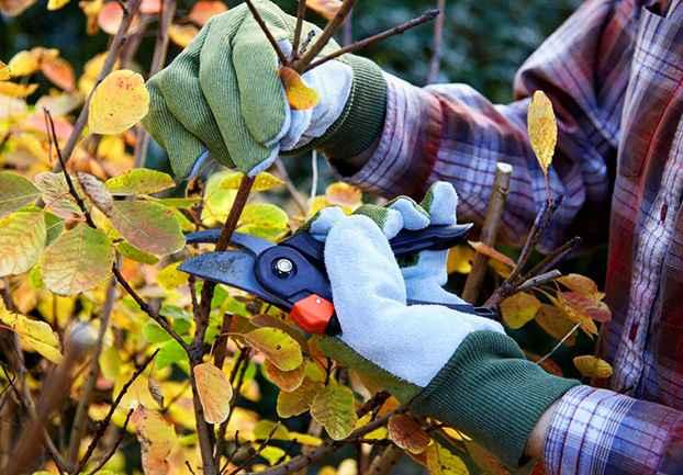 Fall tree maintenance and preventative tree maintenance in the Portland metro
