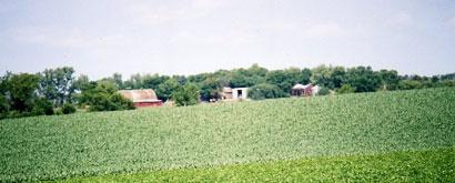 A field of green plants