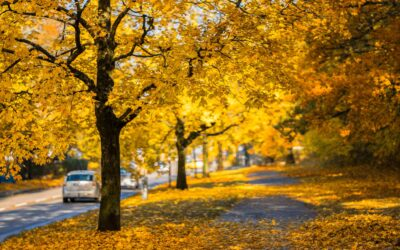 Look at the Leaves, But Not While You're Driving