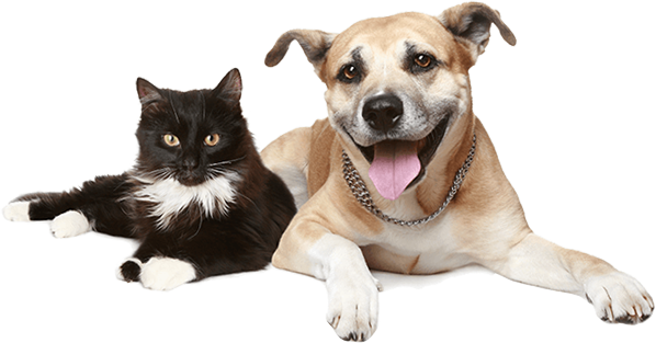 Fur Pet Care | Austin Dog Walker & Pet Sitting Company