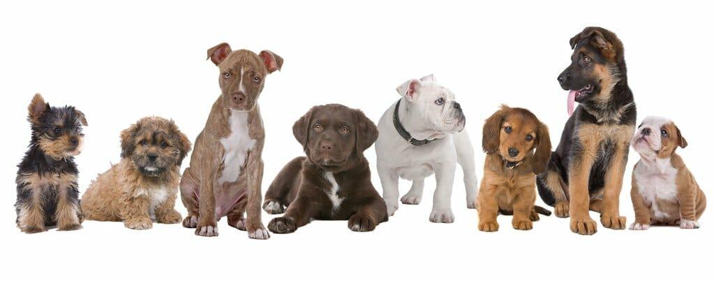 Dr John's Remedies   Dogs Pets Cats CBD Hemp Oil Tincture Capsules Organic Colorado USA