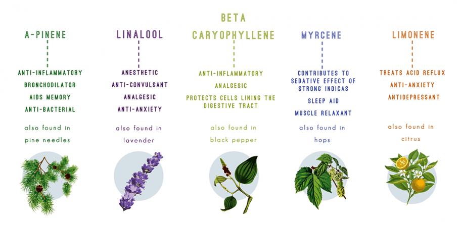 types of terpenes found in hemp cbd full spectrum oil