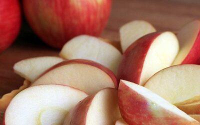 Apple Tasting at Reems Creek Nursery