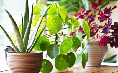 Plant Parenthood – Keeping Your Plants Happy During Winter