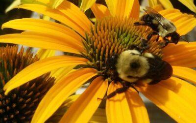 Certify Your Pollinator Garden