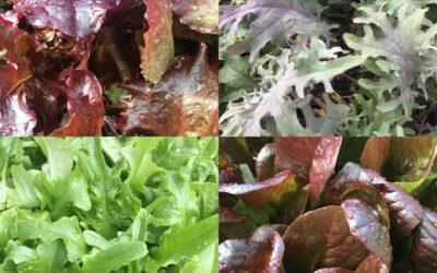 Fall Veggie Gardening