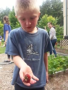 wow, strawberries!