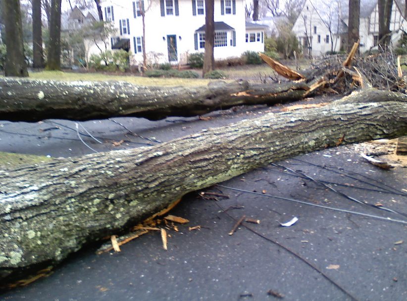 structural damage by fallen tree