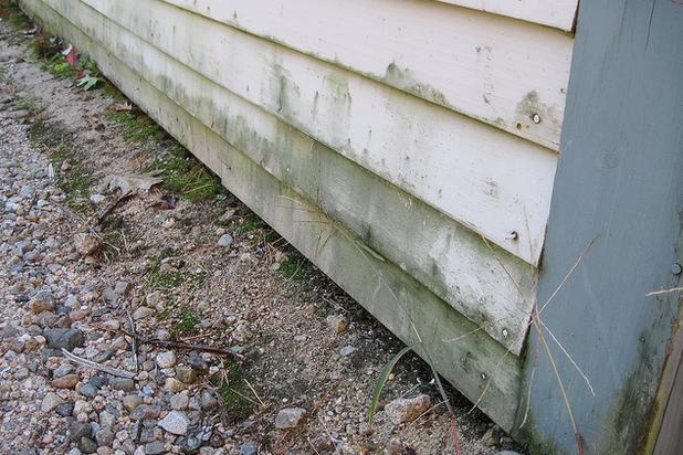 mold on home's siding