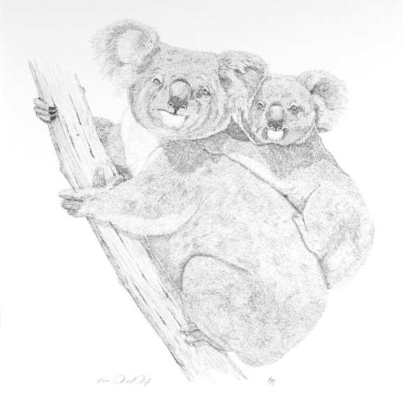 Koalas by Martin May