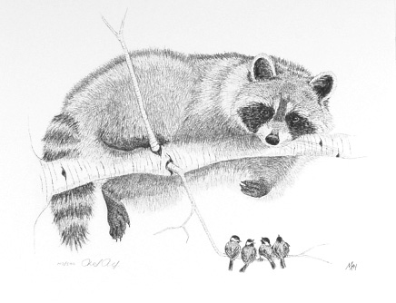 Raccoon and Chickadees by Martin May