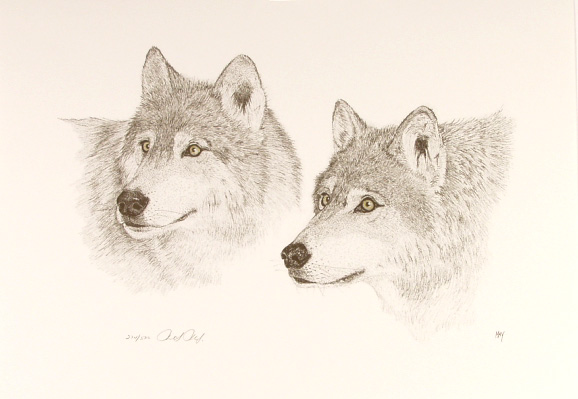 Timber Wolves by Martin May