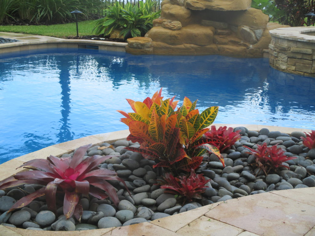 """Photo shows a closeup of Mexican Beach Pebble stone being used in a pool planter with some Bromeliads for a clean, tropical look.  3"""" - 5"""" stones were used in the project as a larger stone is often a better choice for pools with a lot of splashing as they do not move with water as easily.  Hope you like."""