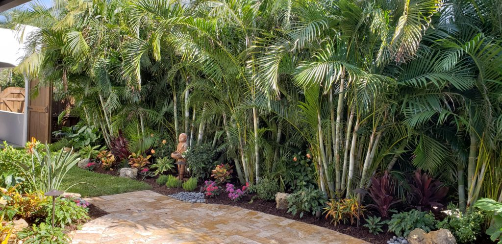 Tropical courtyard with new pavers & landscape