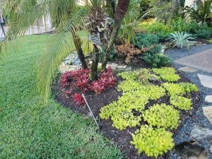 Gold Sedum - light green succulent ground cover