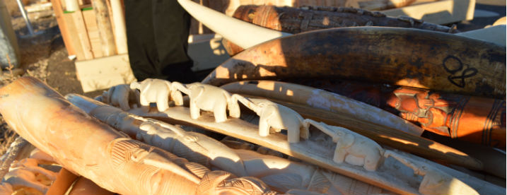 Elephant ivory is a key product in wildlife trafficking